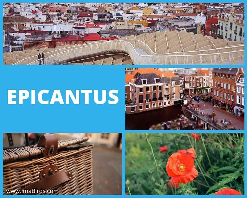 Epicantus - lizenz- & kostenfreie Bilder