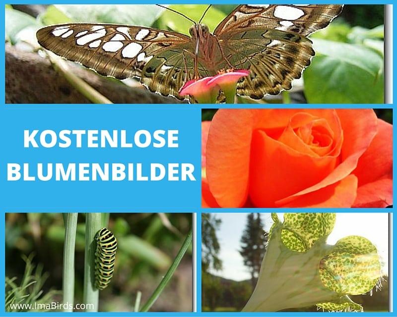 Kostenlose Blumenbilder und Naturfotos