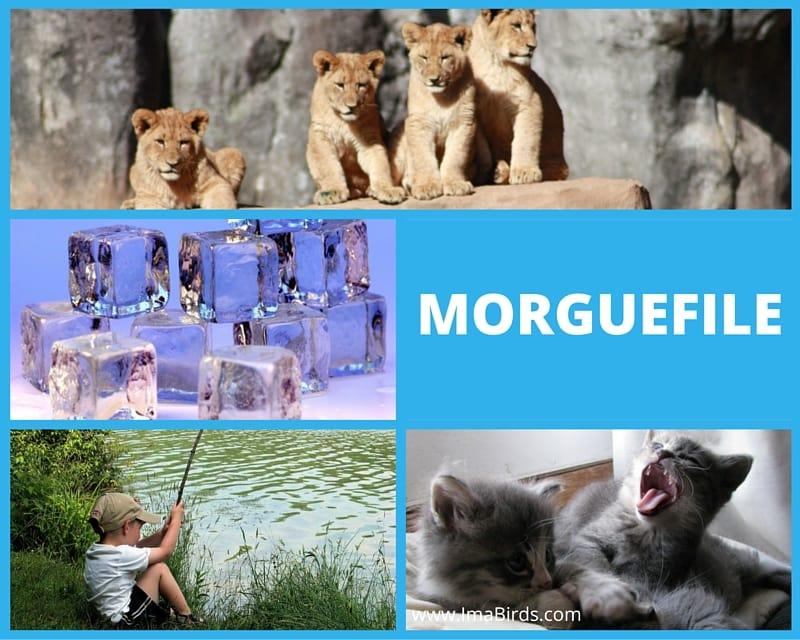 Riesige Bilderdatenbank von Morguefile