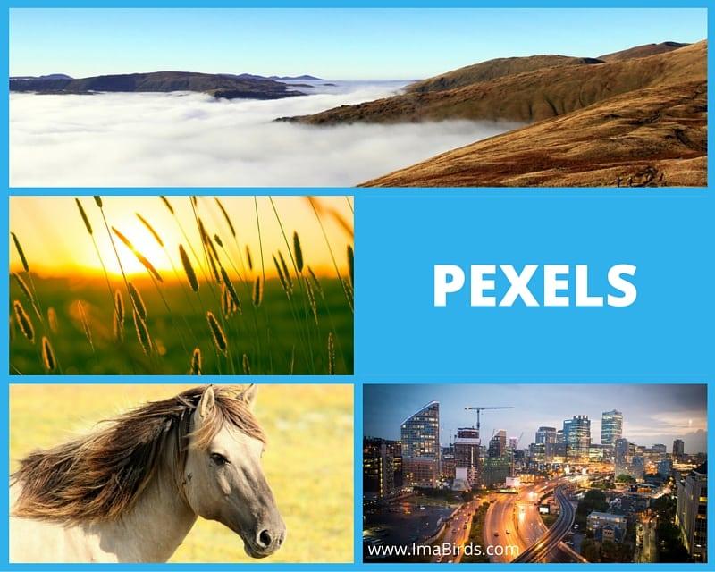 Freie und kostenlose Bilder von Pexels