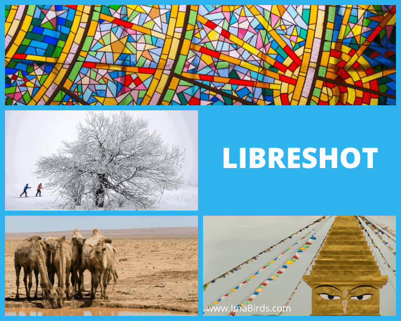 Kostenlose Bilder downloaden von Libreshot